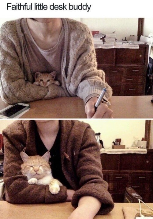 faithful little desk buddy | pic of a person in a sweater writing at a desk with a small kitten snuggled under their free arm, pic of same person in a similar position but with the cat much more grown