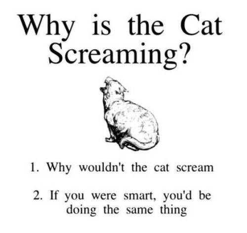 why is the cat screaming? 1. why wouldn't the cat scream 2. if you were smart you'd be doing the same thing illustration of a cat meowing