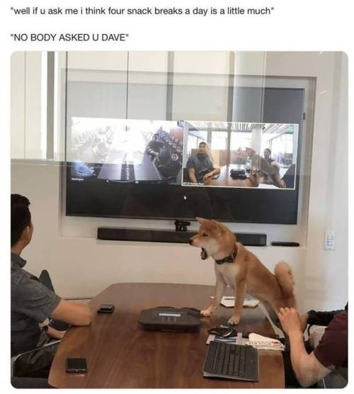 shiba inu dog climbing on a table and barking at a person | well if u ask me i think four snack breaks a day is a little much NP BODY ASKED U DAVE