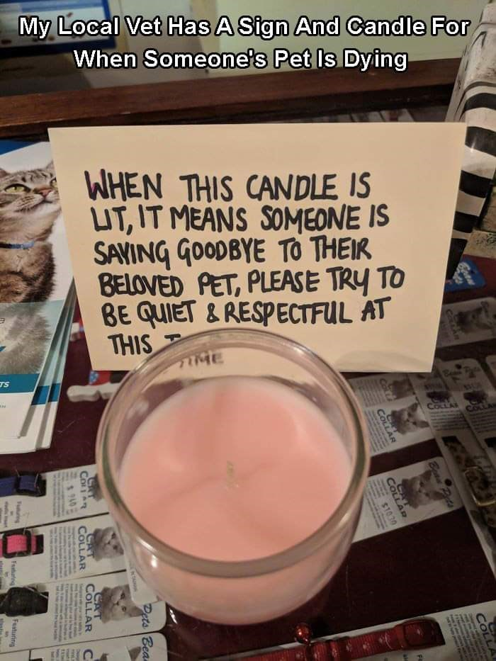 Food - My Local Vet Has A Sign And Candle For When Someone's Pet Is Dying WHEN THIS CANDLE IS UT, IT MEANS SOMEONE IS SAVING GOODBYE TO THEIR BELOVED PET, PLEASE TRY TO BE QUIET & RESPECTFUL AT THIS IME TS COLLAS Cothe Carn cachn COLLA Bead Horto FAMUTIANCD NEW Y COLLAR $1030 COLLAR Dets Bea CAT COLLAR $40 COLLAR Faturing Fasturing
