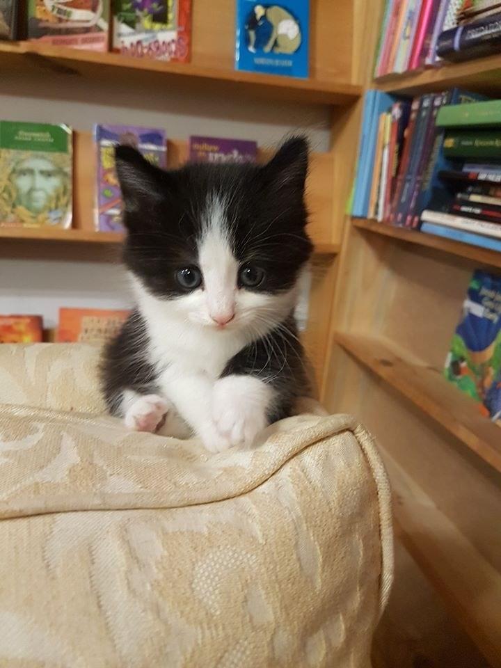 Cat - .פה.