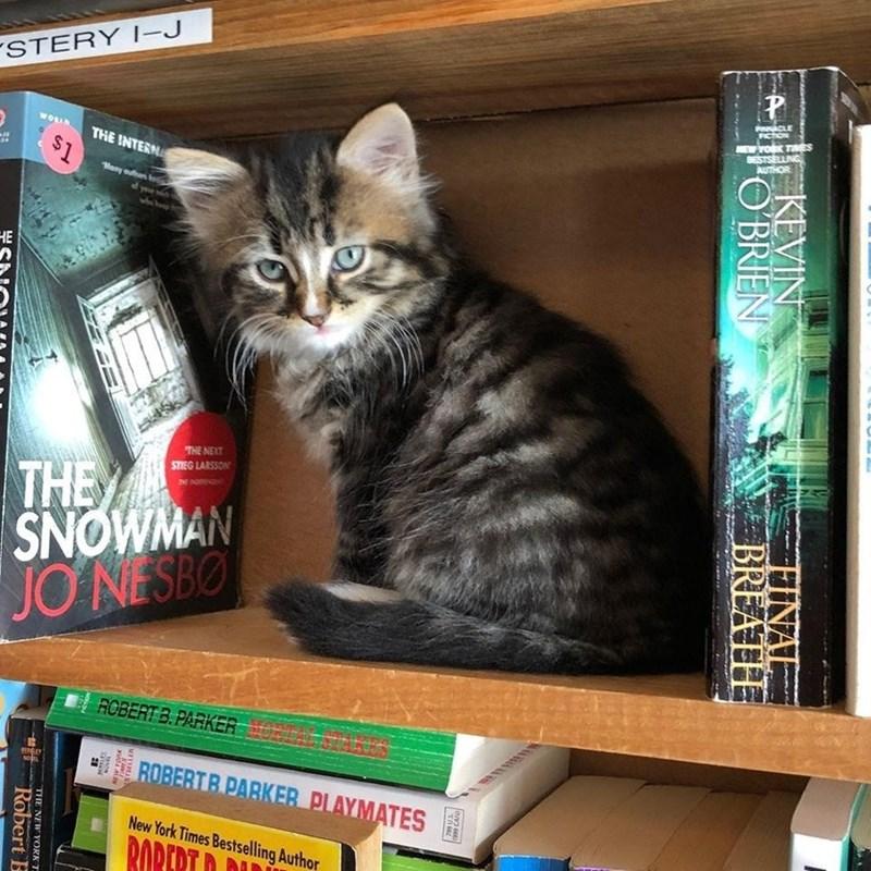 Cat - STERY |-J FICTION MEW YOK TAES BESTSELLING AUTHOR THE INTERNA $1 Many ouhan НЕ THE NEXT STIEG LARSSON THE SNOWMAN JO NESBO ROBERT B.PARKER ROBERTB PARKER PLAYMATES New York Times Bestselling Author RORERT D DU A KEVIN POBRIEN FINAL BREATH THE NEW YORK T Robert B