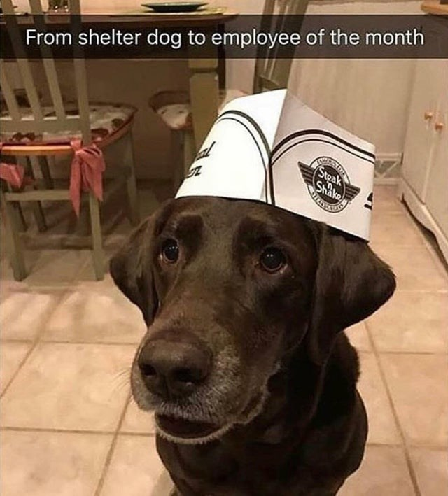 Dog - From shelter dog to employee of the month Steak SRAKO