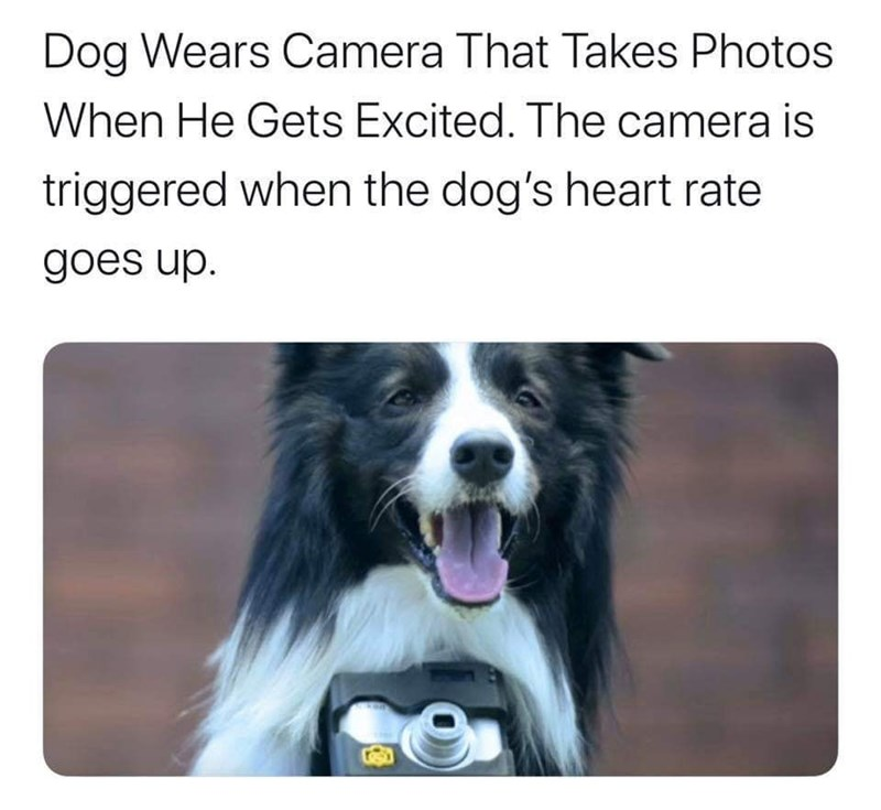 Dog - Dog Wears Camera That Takes Photos When He Gets Excited. The camera is triggered when the dog's heart rate goes up.