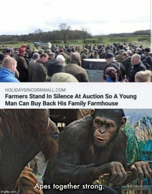 People - HOLIDAYSINCORNWALL.COM Farmers Stand In Silence At Auction So A Young Man Can Buy Back His Family Farmhouse Apes together strong. imgflip.com