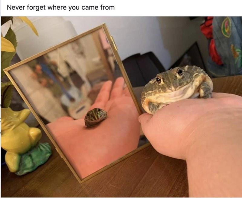 Frog - Never forget where you came from