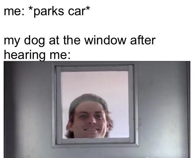 Text - me: *parks car* my dog at the window after hearing me: