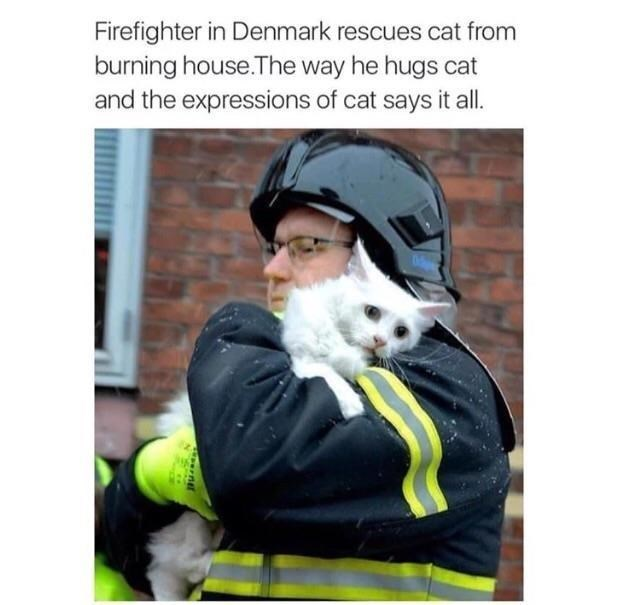 Canidae - Firefighter in Denmark rescues cat from burning house.The way he hugs cat and the expressions of cat says it all. rnel
