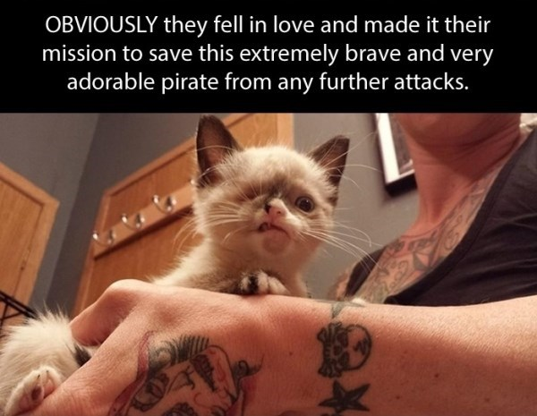 Cat - OBVIOUSLY they fell in love and made it their mission to save this extremely brave and very adorable pirate from any further attacks.