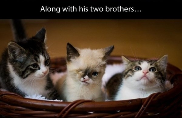Cat - Along with his two brothers...