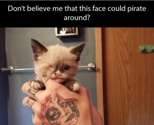 Cat - Don't believe me that this face could pirate around?