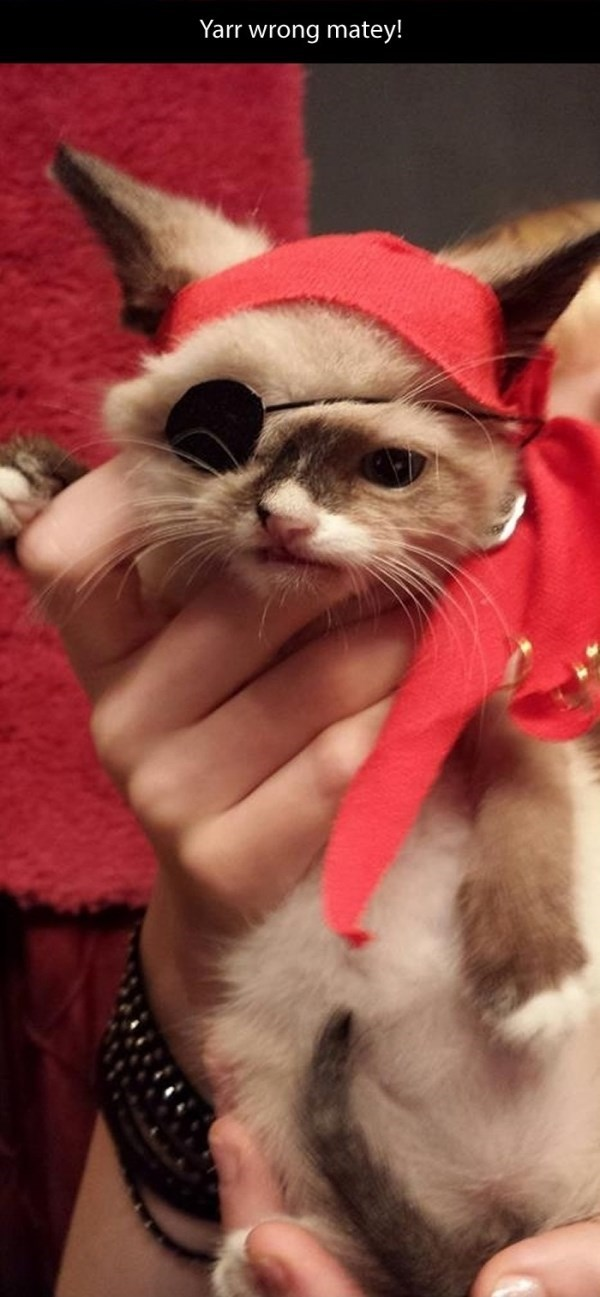 Cat - Yarr wrong matey!