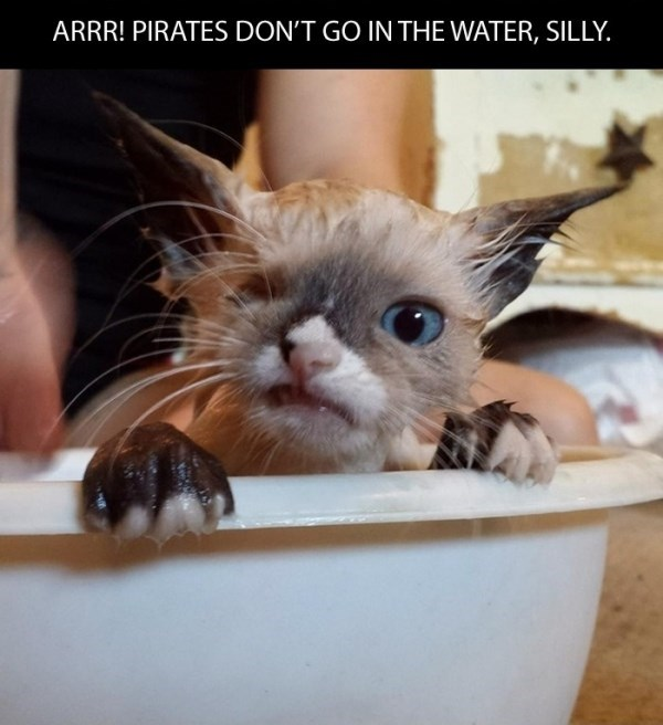 Cat - ARRR! PIRATES DON'T GO IN THE WATER, SILLY.