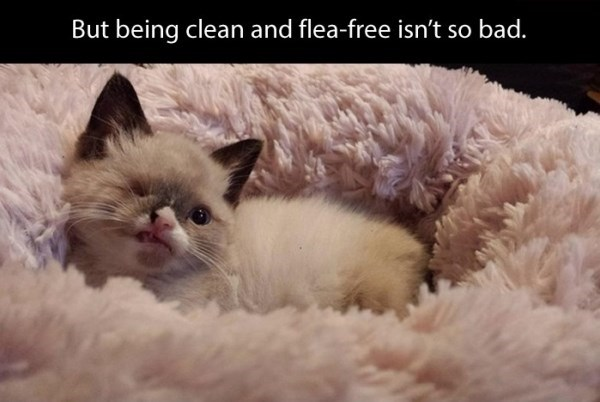 Cat - But being clean and flea-free isn't so bad.