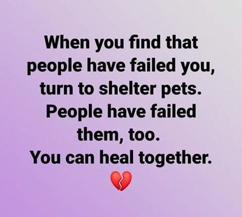 when you find that people have failed you turn to shelter pets people have failed them too you can heal together