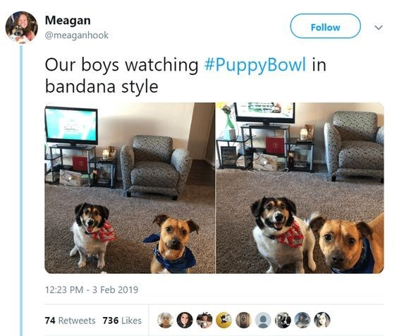 Dog breed - Meagan @meaganhook Follow Our boys watching #PuppyBowl in bandana style 12:23 PM - 3 Feb 2019 74 Retweets 736 Likes