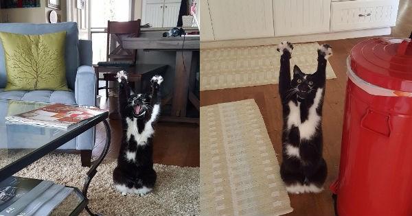 paws goal instagram tricks Cats funny - 943365