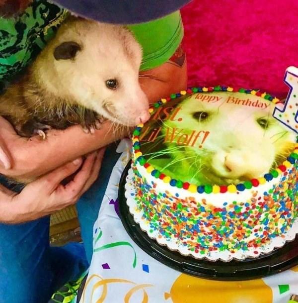 Cake - appy Birthday SL. itelf!
