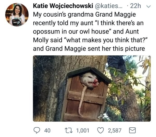 """Adaptation - Katie Wojciechowski @katies. · 22h My cousin's grandma Grand Maggie recently told my aunt """"I think there's an hoe opossum in our owl house"""" and Aunt Molly said """"what makes you think that?"""" and Grand Maggie sent her this picture t7 1,001 2,587 40"""