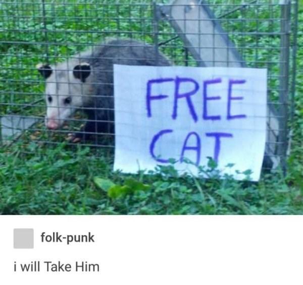 Nature reserve - FREE CAT folk-punk i ill Take Him