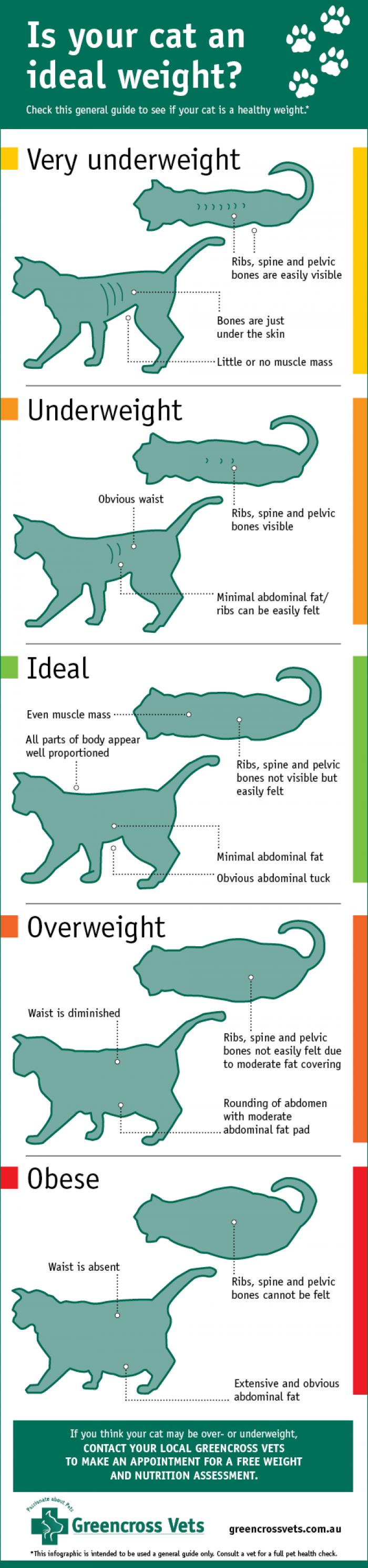 is your cat an ideal weight? check this general guide to see if your cat is a healthy weight. very underweight: ribs spine and pelvic bones are easily visible bones are just under the skin little or no muscle mass. underweight: obvious waist ribs spine and pelvic bones visible minimal abdominal fat/ribs can be easily felt. ideal: even muscle mass all parts of the body appear well proportioned ribs spine and pelvic bones not visible but easily felt minimal abdominal fat obvious abdominal tuck
