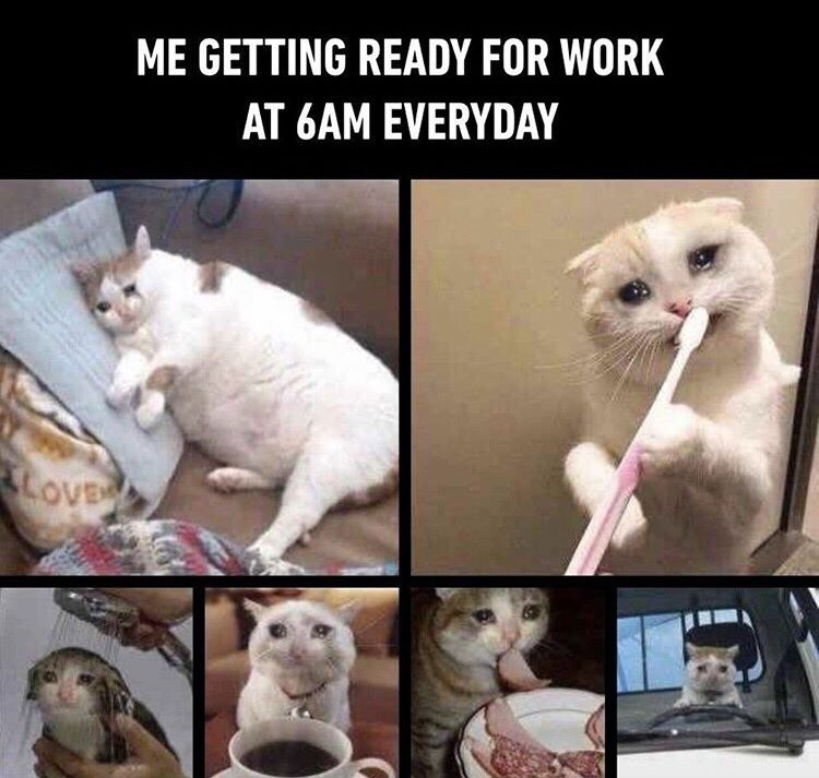 Cat - ME GETTING READY FOR WORK AT 6AM EVERYDAY LOVE