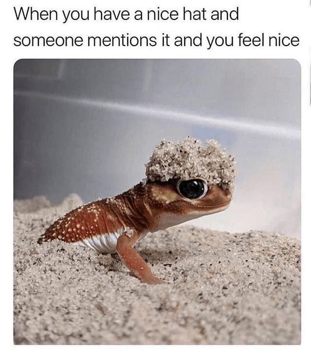 Lizard - When you have a nice hat and someone mentions it and you feel nice