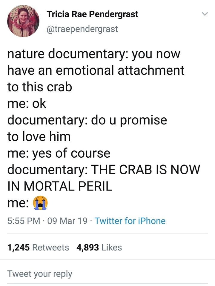 Text - Tricia Rae Pendergrast @traependergrast nature documentary: you now have an emotional attachment to this crab me: ok documentary: do u promise to love him me: yes of course documentary: THE CRAB IS NOW IN MORTAL PERIL me: 5:55 PM · 09 Mar 19 · Twitter for iPhone 1,245 Retweets 4,893 Likes Tweet your reply
