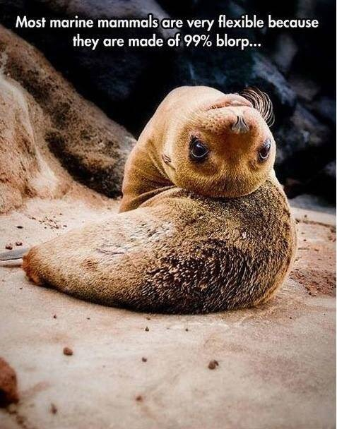 most marine mammals are very flexible because they are made of 99% blorp pic of a cute baby seal turning its head upside down