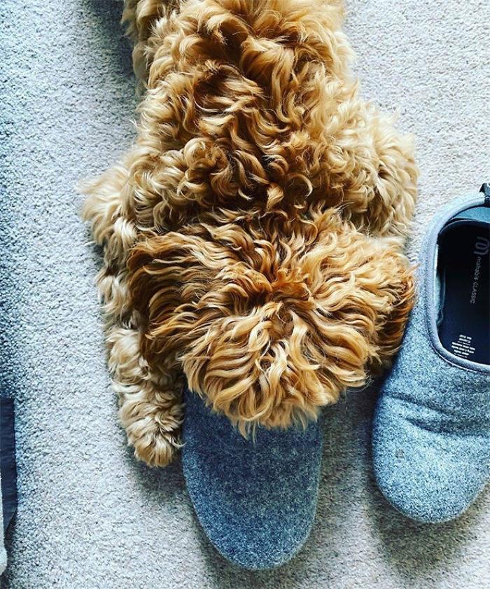 Dog - mahabis CLASSIC