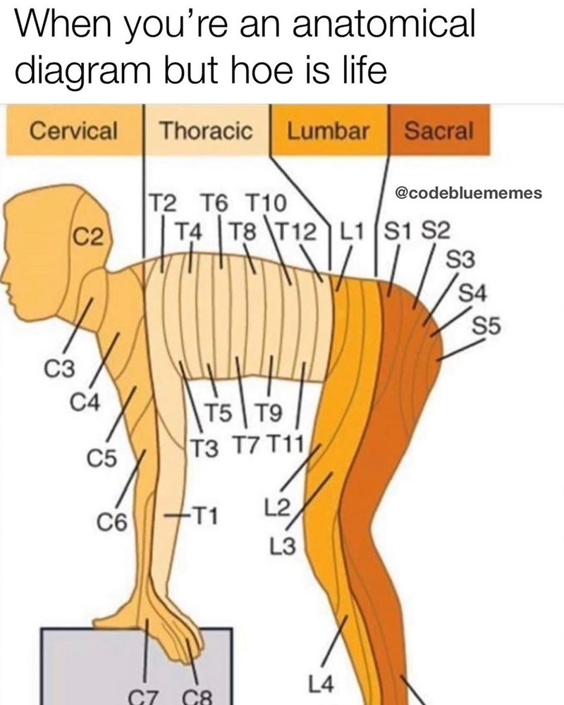 Joint - When you're an anatomical diagram but hoe is life Lumbar Sacral Cervical Thoracic @codebluememes T2 T6 T10 T4 T8 T12 L1 S1 S2 C2 S3 S4 S5 СЗ C4 T5 T9 тЗ 77 T11 C5 L2 +T1 C6 L3 L4 C7 C8
