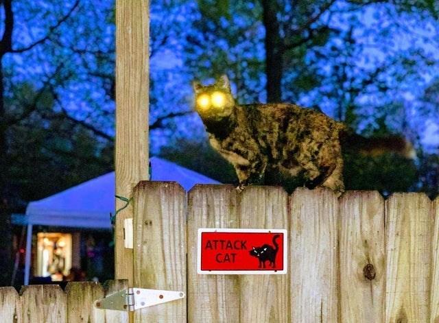 Tree - ATTACK CAT