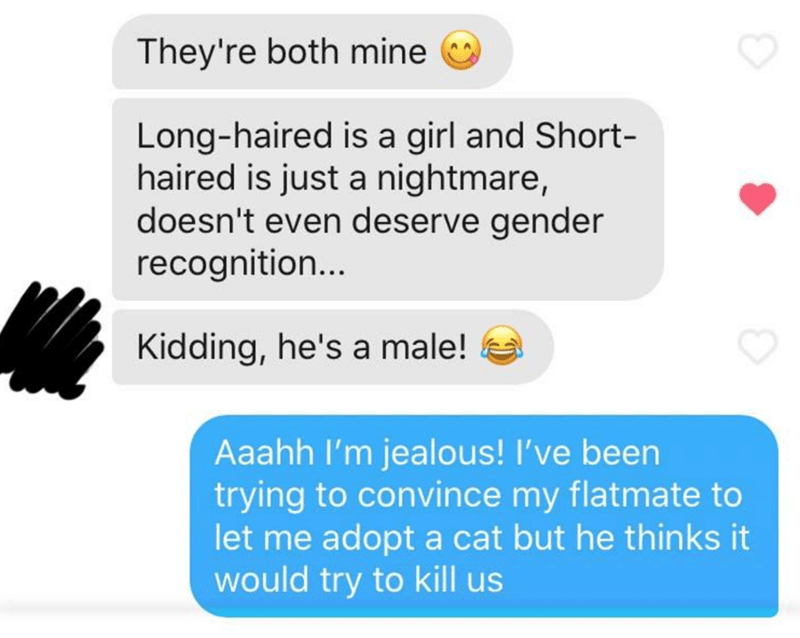 Text - They're both mine Long-haired is a girl and Short- haired is just a nightmare, doesn't even deserve gender recognition... Kidding, he's a male! Aaahh l'm jealous! I've been trying to convince my flatmate to let me adopt a cat but he thinks it would try to kill us