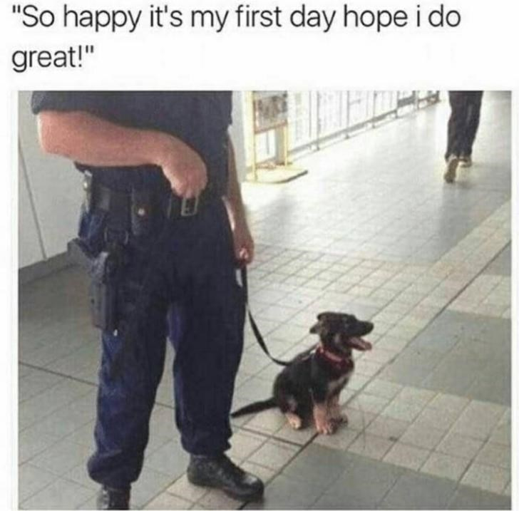 "Dog - ""So happy it's my first day hope i do great!"""