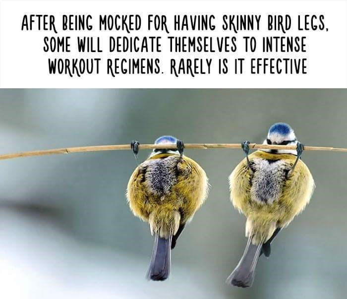Organism - AFTER BEING MOCKED FOR HAVING SKINNY BIRD LECS. SOME WILL DEDICATE THEMSELVES TO INTENSE WORKOUT RECIMENS. RARELY IS IT EFFECTIVE