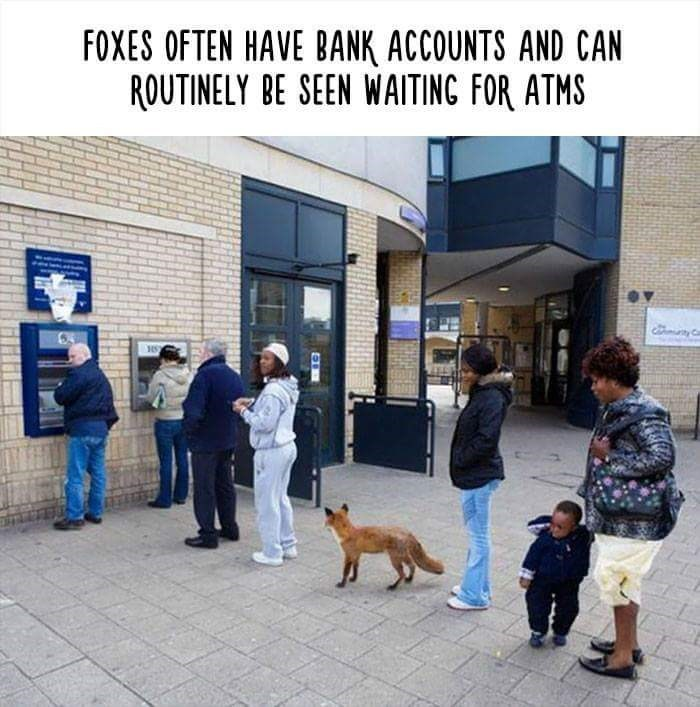 Dog - FOXES OFTEN HAVE BANK ACCOUNTS AND CAN ROUTINELY BE SEEN WAITING FOR ATMS