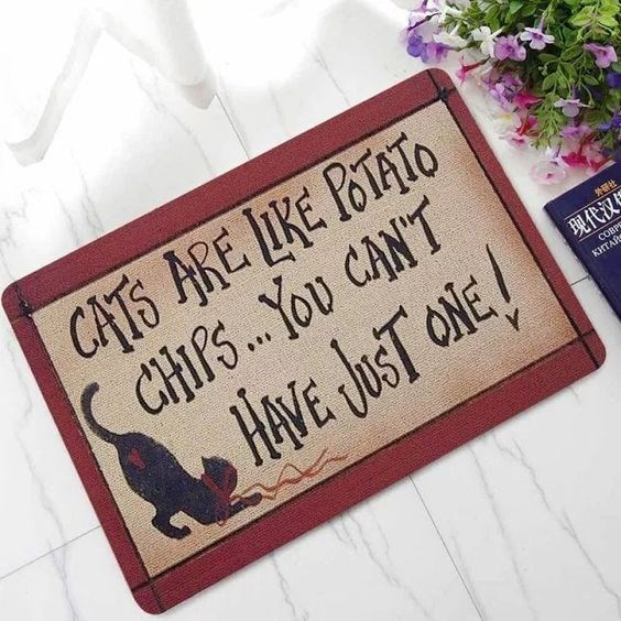 Font - CATS ARE LIKE POTATO ( CHIPS.You CANT HAVE JST ONE! 现代汉S COBPS КИТАЙ