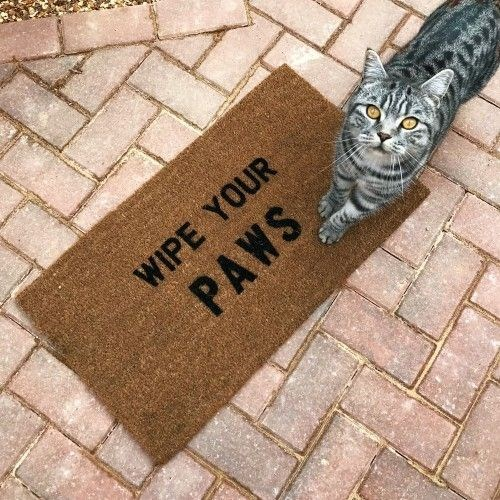 Cat - WIPE YOUR PAWS