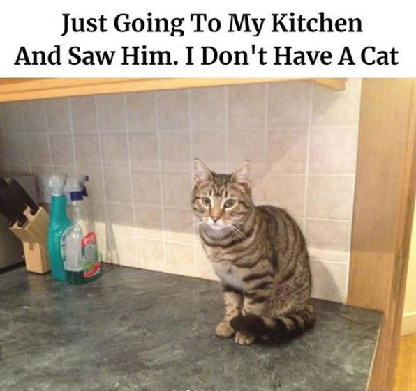 Cat - Just Going To My Kitchen And Saw Him. I Don't Have A Cat