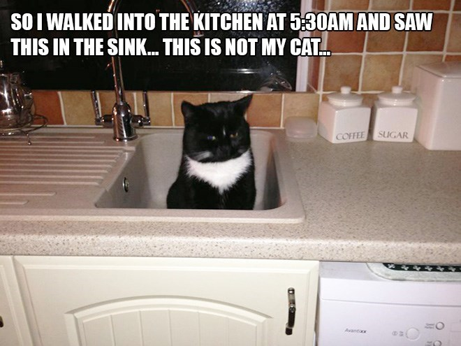 Cat - SO I WALKED INTO THE KITCHEN AT 5.30AM AND SAW THIS IN THE SINK. THIS IS NOT MY CAT. SUGAR COFFEE Avantac