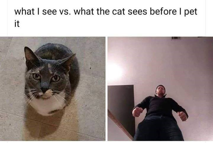 what i see vs what the cat sees before i pet it pic taken from a high angle of a cat looking up, pic taken from a low angle of a man looking down