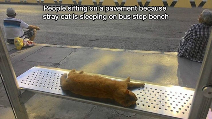 American food - People sitting on a pavement because stray cat is sleeping on bus stop bench