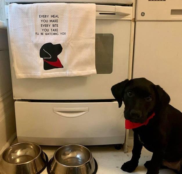 Dog - EVERY MEAL YOU MAKE EVERY BITE YOU TAKE AL DE WATCHING YOU