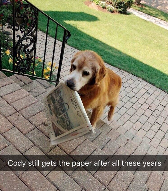 Dog - Cody still gets the paper after all these years TRAVEL TEW AlCH