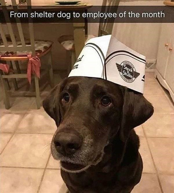 Dog - From shelter dog to employee of the month Steak