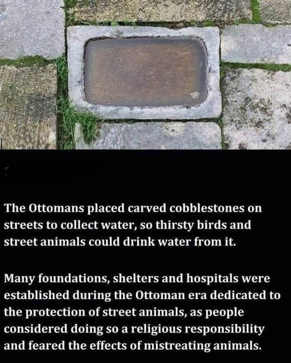 Text - The Ottomans placed carved cobblestones on streets to collect water, so thirsty birds and street animals could drink water from it. Many foundations, shelters and hospitals were established during the Ottoman era dedicated to the protection of street animals, as people considered doing so a religious responsibility and feared the effects of mistreating animals.