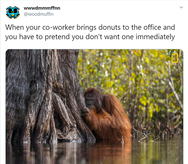 Wildlife - wwwdmmmffnn @woodmuffin When your co-worker brings donuts to the office and you have to pretend you don't want one immediately