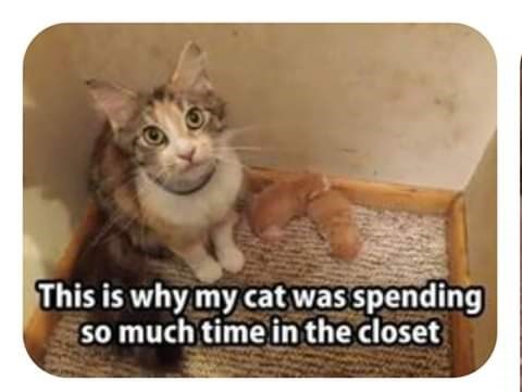 Cat - This is why my cat was spending so much time in the closet