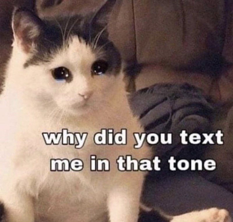 Cat - why did you text me in that tone