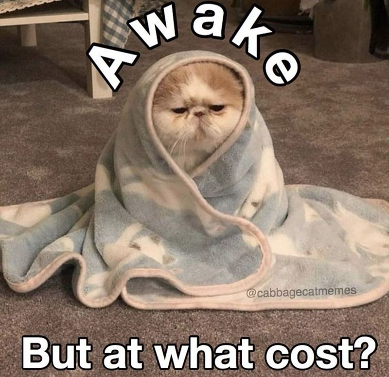 Photo caption - Wake @cabbagecatmemes But at what cost?